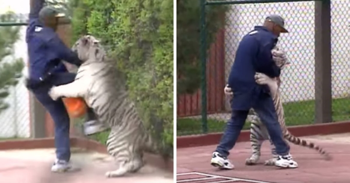 Tiger King Mike Tyson Regrets Owning Big Cats: I Was Doing The Wrong Sh-t - BoxingScene.com